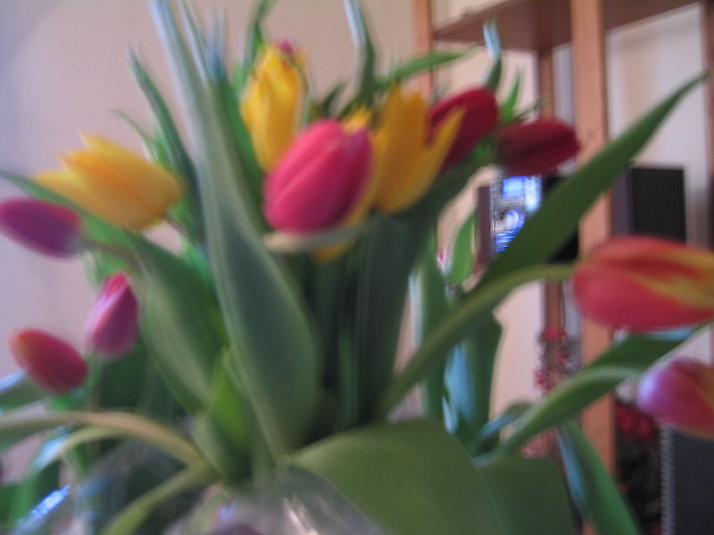 Tulips for Laura